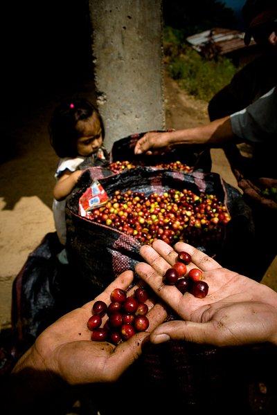 Coffee farming community